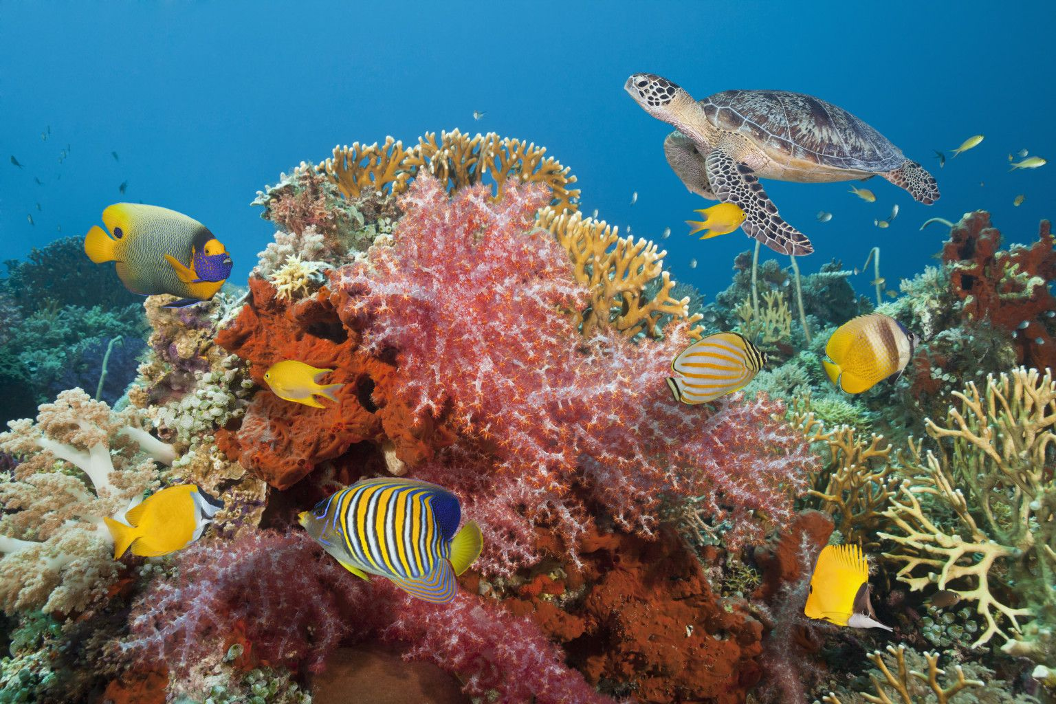 o-CORAL-REEF-facebook.jpg (1536×1024) | The End of the World ...