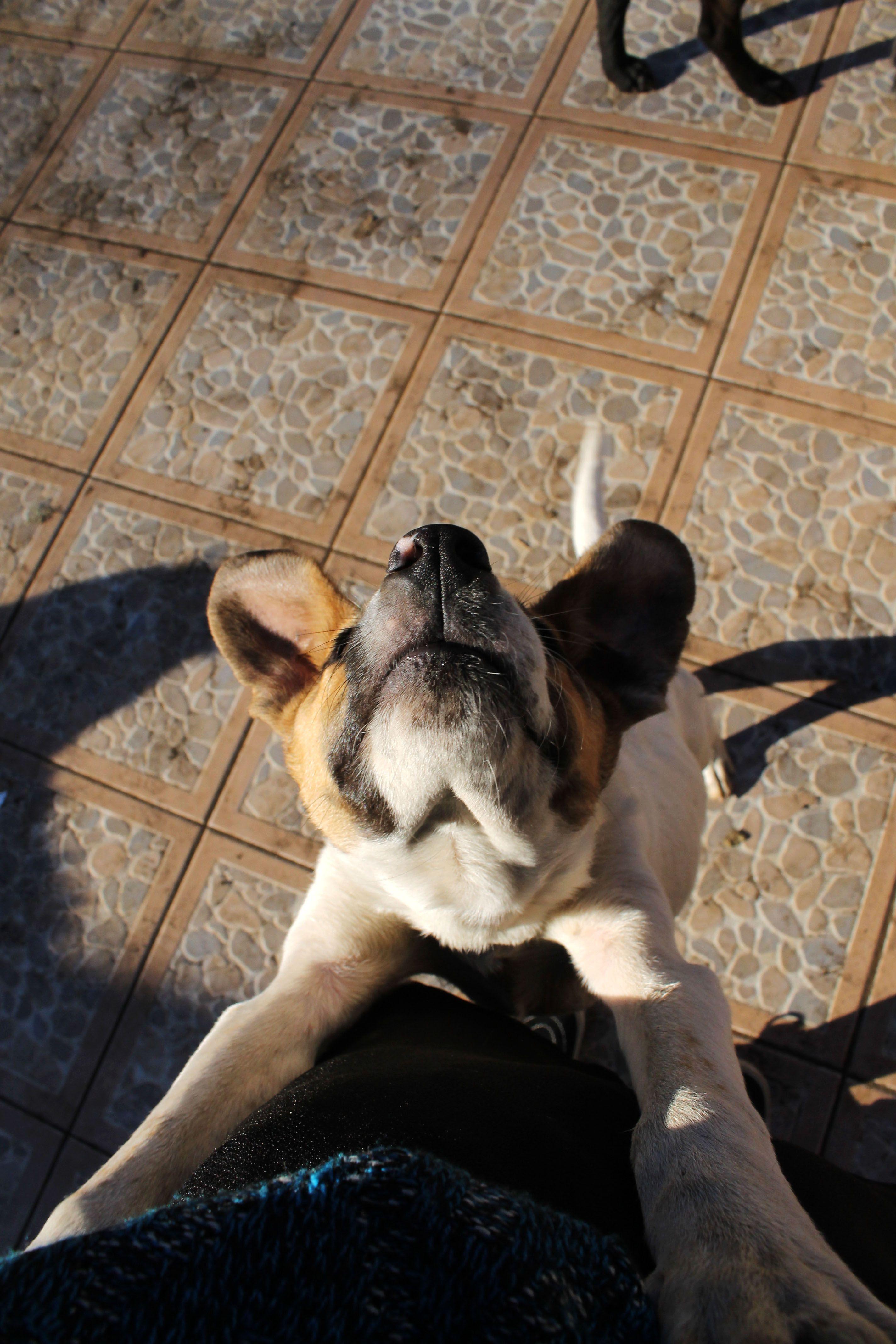Regalo cachorro <3
