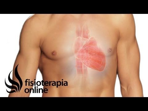 Sistema cardio-circulatorio y dolor de cuello, espalda- ¿Qué relación tienen? - YouTube