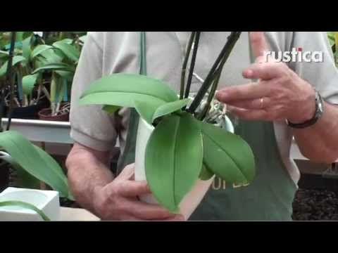 Epingle Sur Cultiver Et Faire Refleurir Vos Orchidees