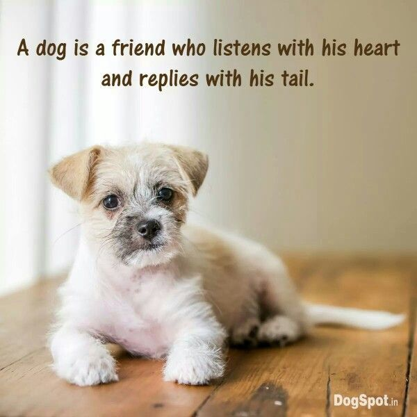 Puppies For Sale Dog Quotes Animal Lover Quotes