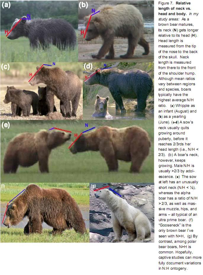 Grizzly Bear Anatomy | Message Board | animals anatomi | Pinterest ...