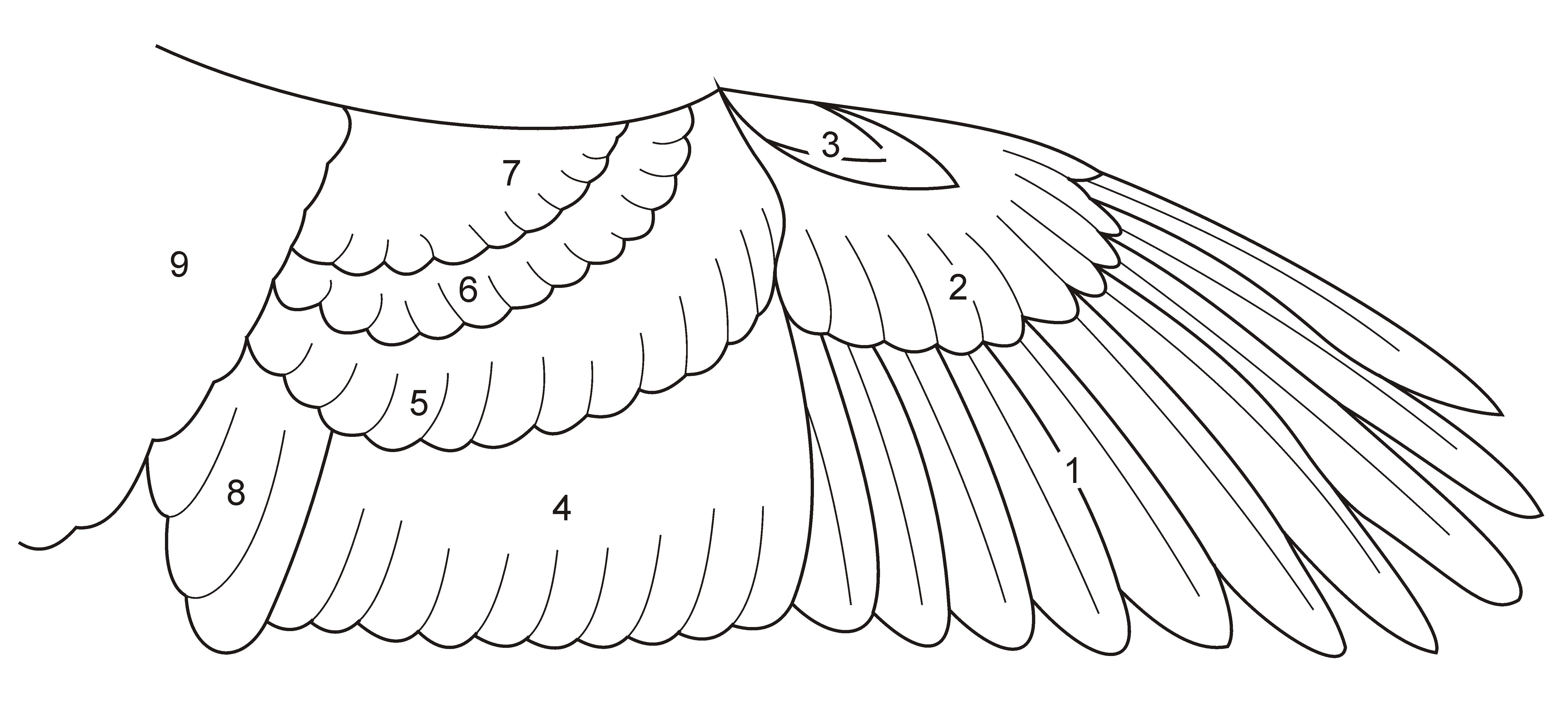 Wing Diagram