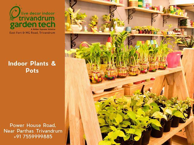 Bon Trivandrum Garden Tech: Indoor Plants U0026 Pots