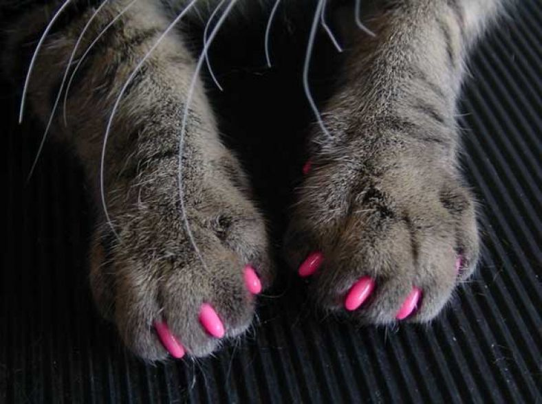 Feline Soft Claws Nail Caps Prevent Damage At Home