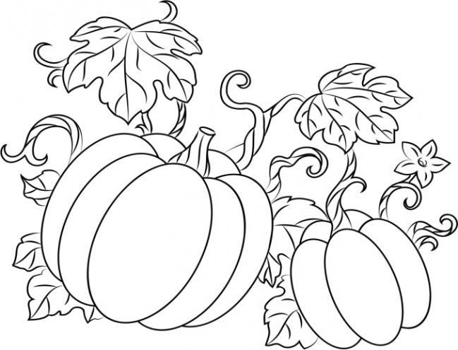 Dibujos de calabazas para colorear | dibujos de frutas y verduras