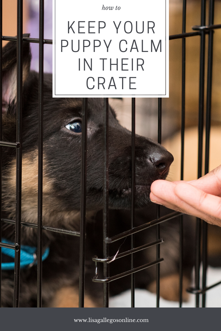 Does Your Puppy Keep Crying In Their Crate Learn How To Keep Your Puppy Calm In Their Crate Puppytraining Crate Training Dog Puppies Puppy Training