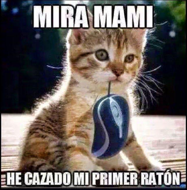Chistes De Perros Y Gatos Buscar Con Google Chistes De Perros Chiste De Gatos Meme Gato