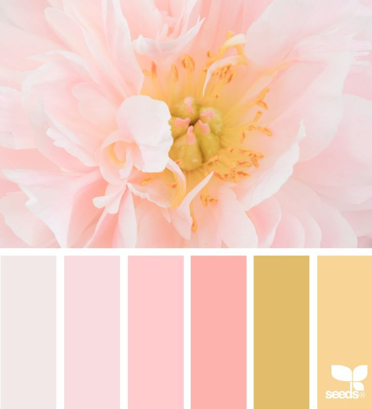Farbtrends, Wandgestaltung Und Farbpalette