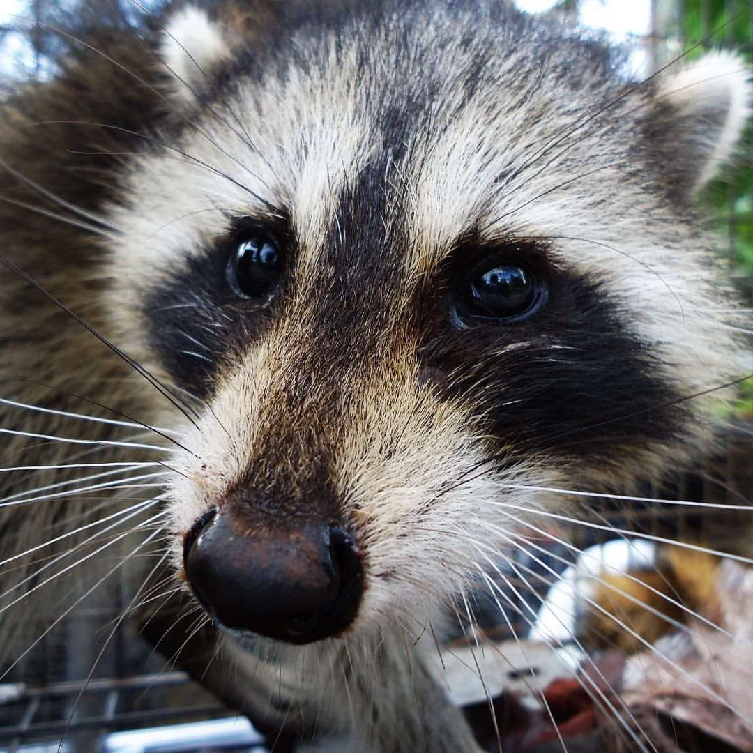 Pin On Animal Rangers Florida Nuisance Wildlife Management Pest Control Services