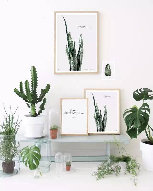 工作在生活里 荷兰设计师maaike Koster的家和工作室 Plants Decor