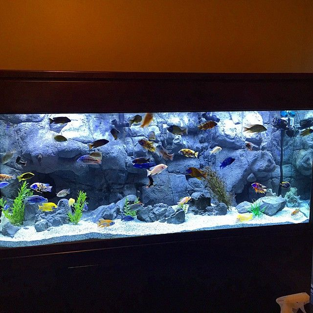 Universal rocks texas wall background is one of our most for Fish tank backdrop