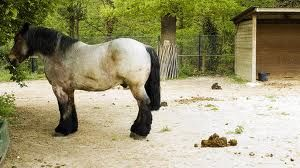 Horse Poop 101 - The Naturally Healthy Horse | Equine