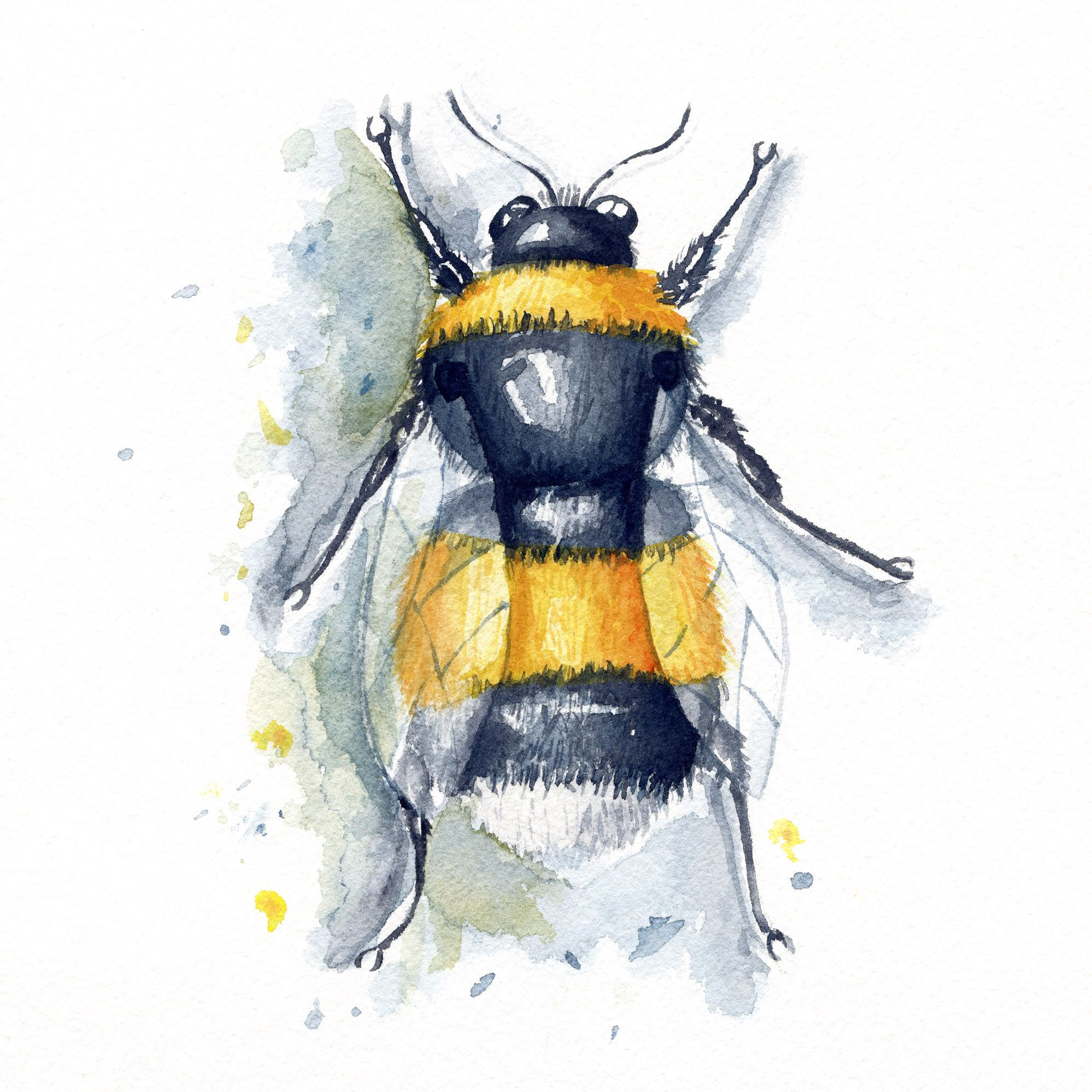 Watercolor Aquarelle Illustration Bumblebee Bee Bourdon