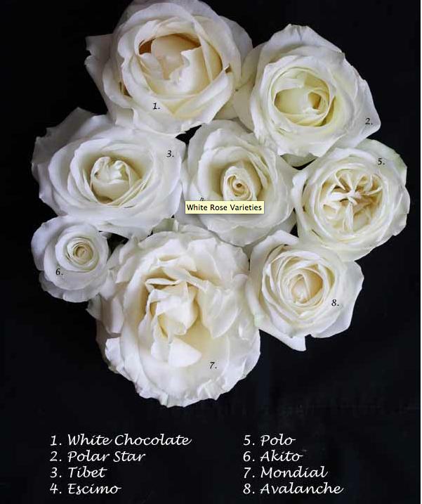 White Roses Rose Varieties White Roses Rose