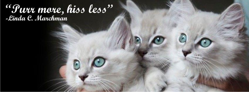 Kitten Jumps Off Toilet, Kitten Junk Lyrics, Kitten Japanese Eyes Lyrics, Kitten Kaboodle, Kitten Kneading