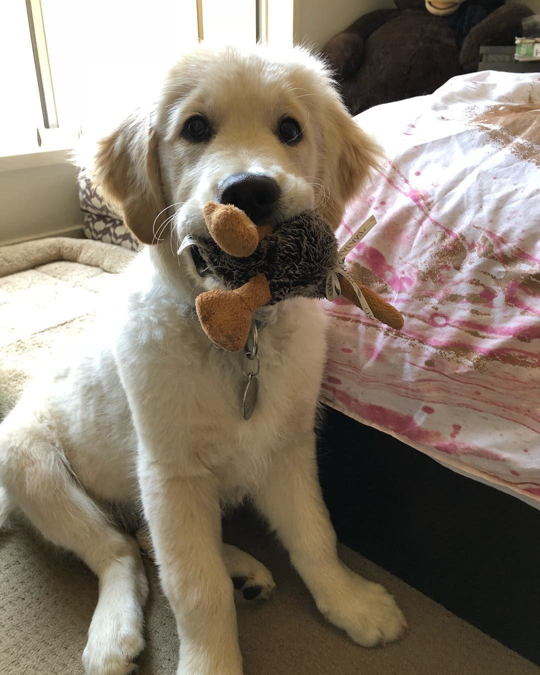 Halpert Dogs Cute Dogs Dogs Dog Toys