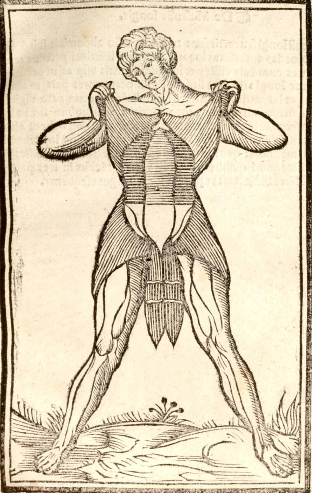 Right page of Anatomia Carpi by Jacopo Berengario da Carpi, 1535 ...