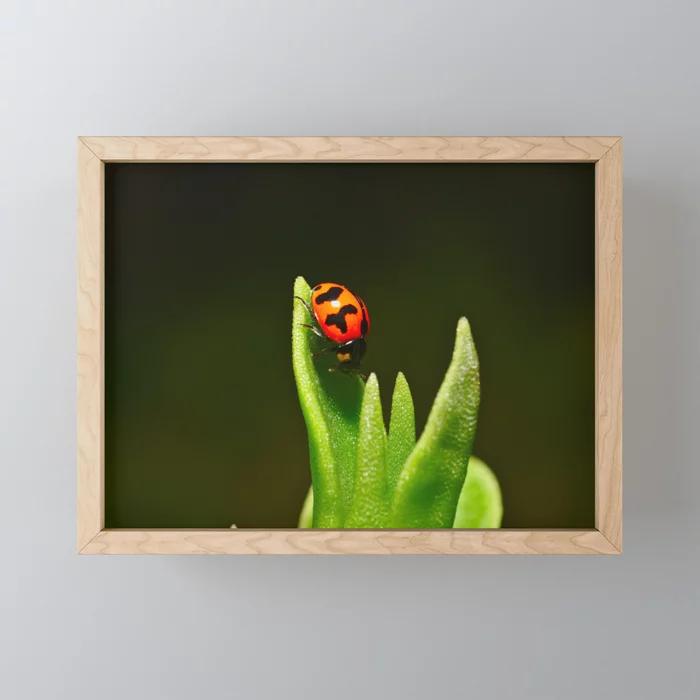 An Orange Ladybird Walking Down A Pointy Succulent Framed Mini Art Print by luck...#art #framed #ladybird #luck #mini #orange #pointy #print #succulent #walking