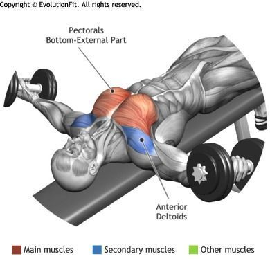 Chest Decline Dumbbell Flyes Chest Workout Fitness Chest