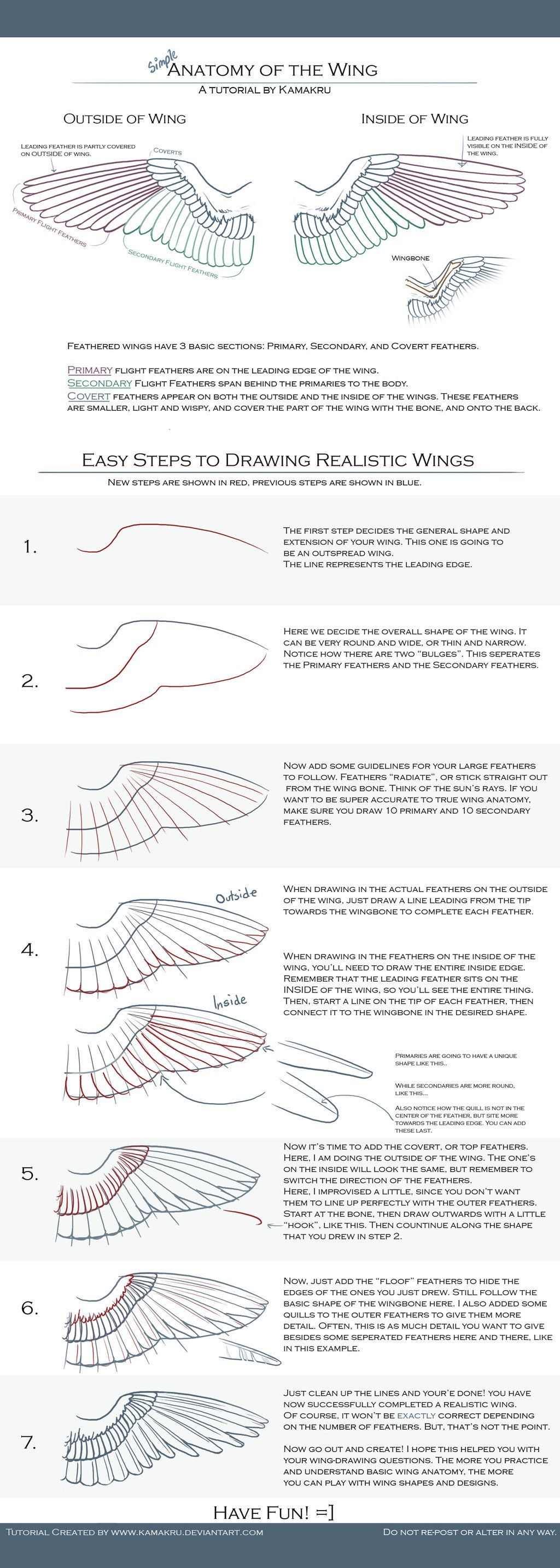 Anatomy of a realistic wing | How to draw_____ | Pinterest | Anatomy ...