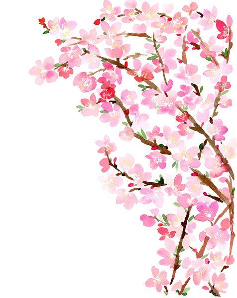 Watercolor Cherry Blossoms Art Print