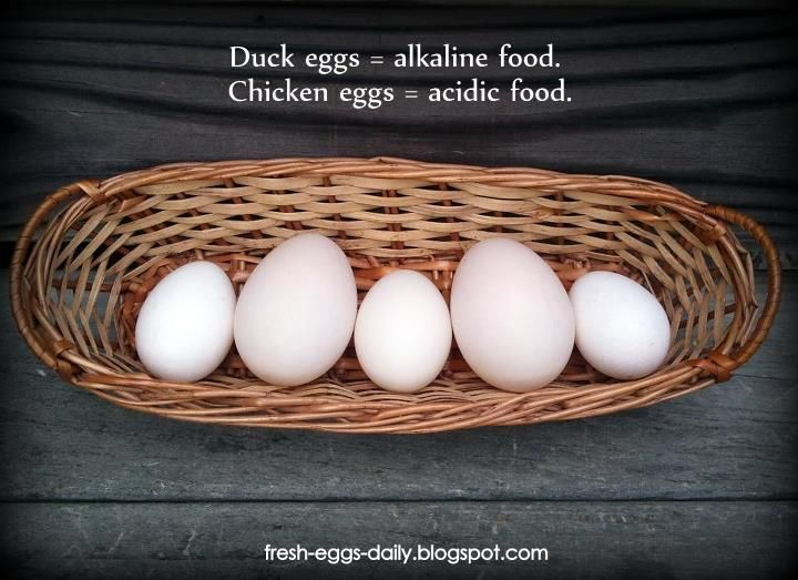 All About Duck Eggs Duck Eggs Eggs Acidic And Alkaline Foods