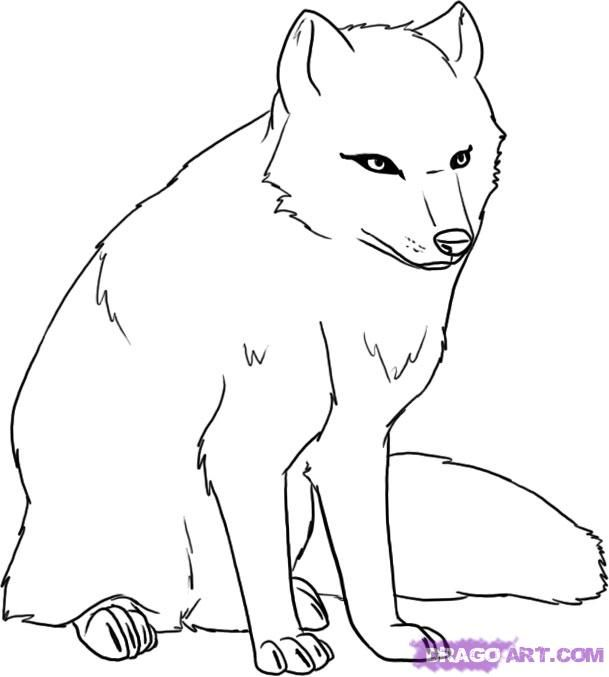 Arctic Fox Google Search Fox Coloring Page Drawings Arctic Fox