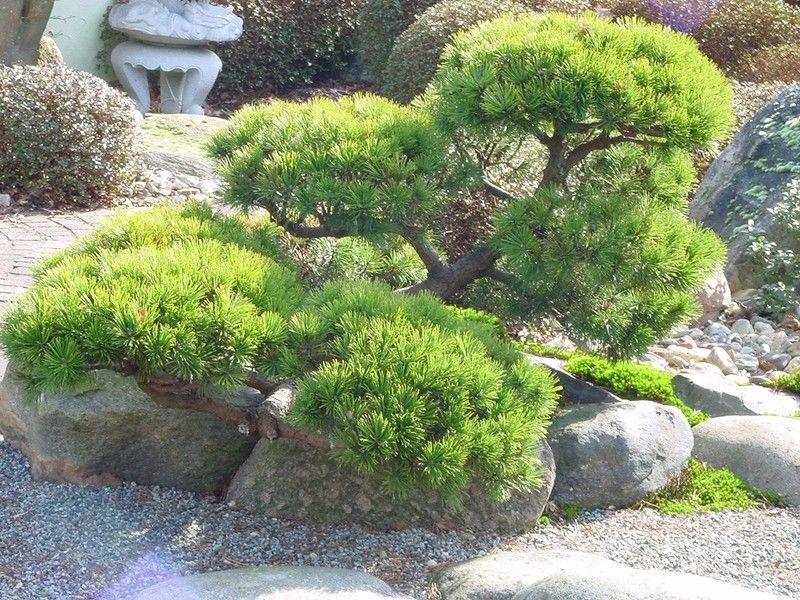 Inspirational kleinen japanischen Garten Teich Google Search