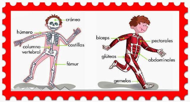 Canción de los huesos y músculos | Educación | Pinterest | El hueso ...