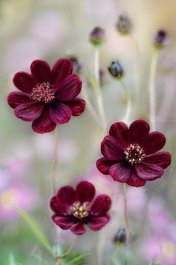 Ravenwhimsy S Wonderful World Bypooyie Coffeenuts Sunflower Magic By Avec Images Photo Fleurs Photographie De Fleur