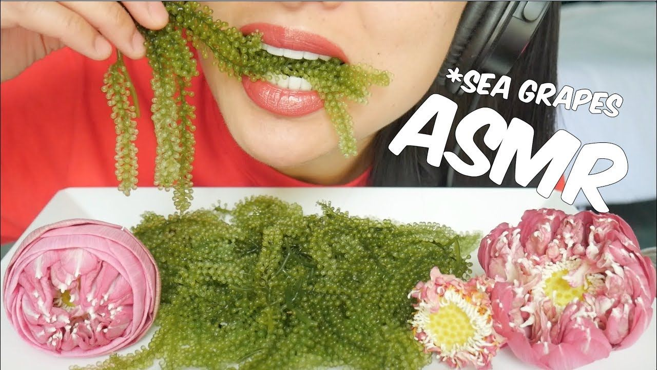 Asmr Raw Sea Grapes Extreme Crunch Eating Sounds No Talking Sas Asmr Asmr Weird Food Grapes 3,468 likes · 9 talking about this. asmr raw sea grapes extreme crunch