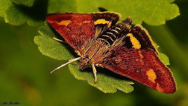 Пин на доске Лора Ретлинг Цветы и бабочки