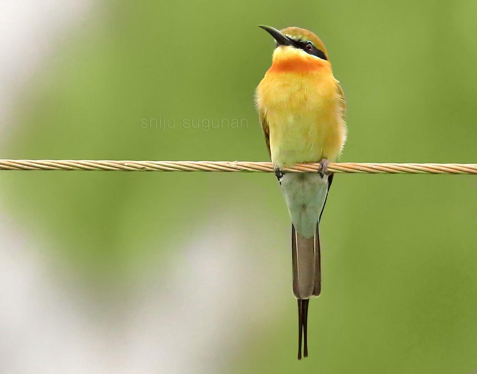Birding at Hennagara lake (With images) Lake, Birds