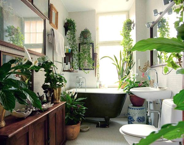 Bathroom W A Range Of Tropical Plants Peace Lily Snake Plant