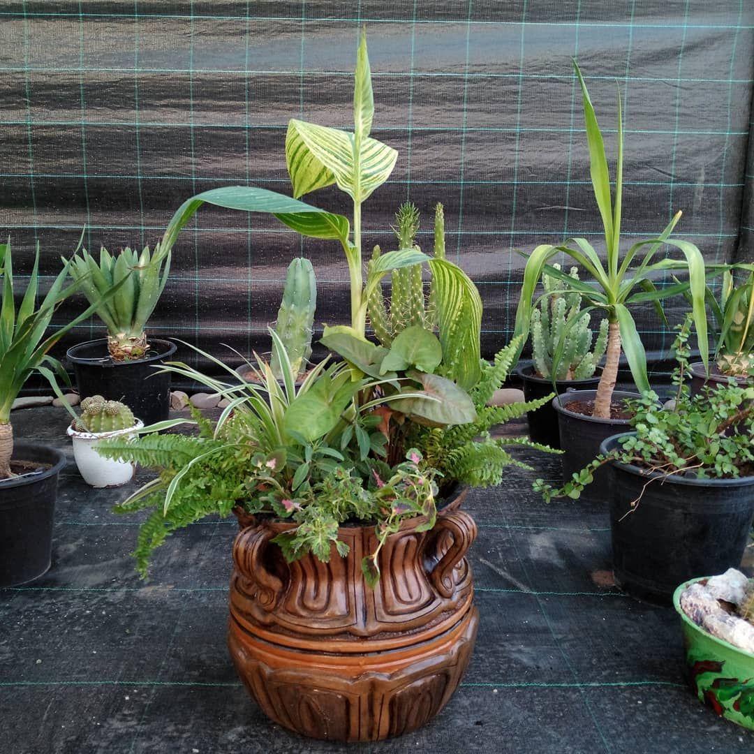 Plantes Decoration Jardin Jardinage Cactus Succulents Maroc