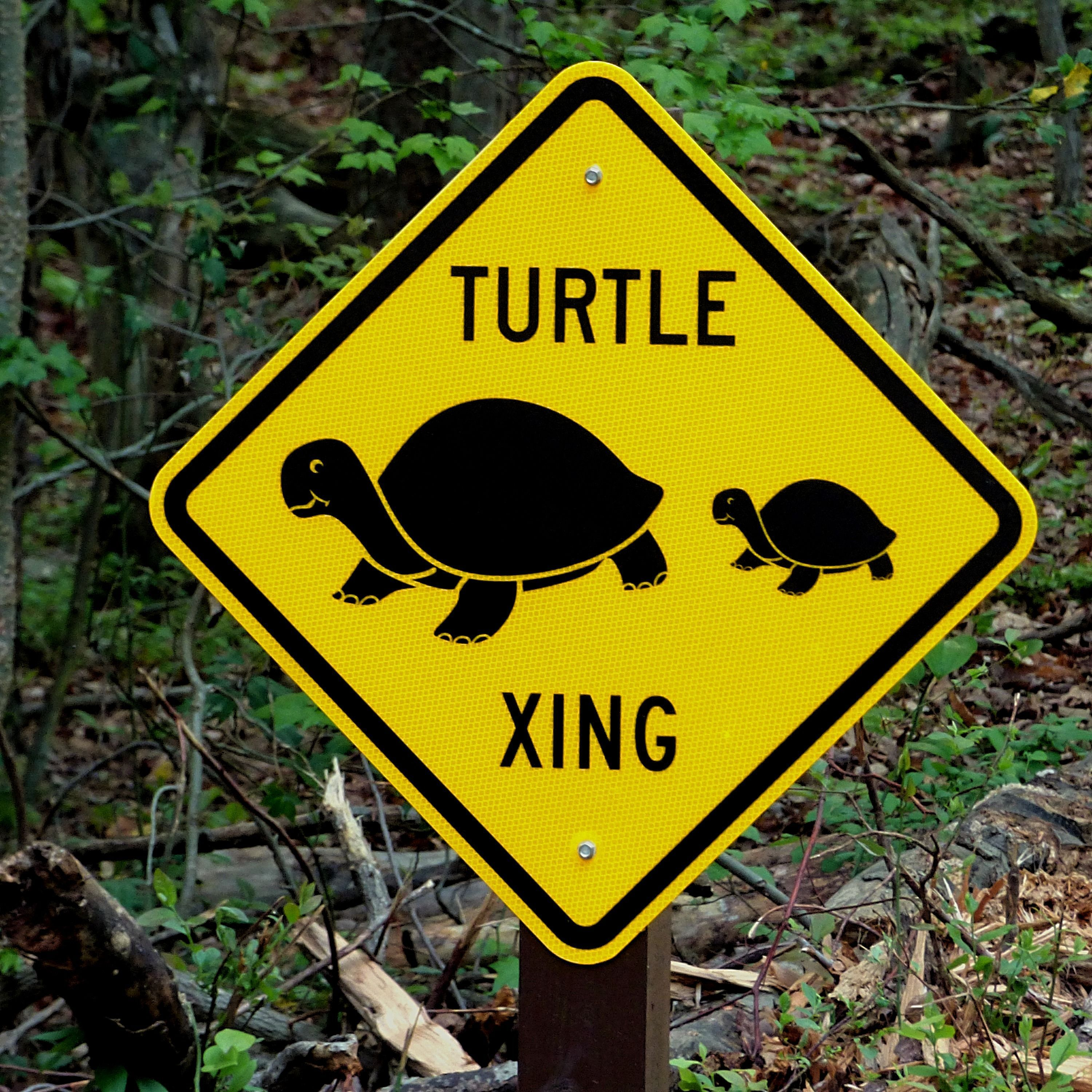 Turtles are believed to have been around for over million years