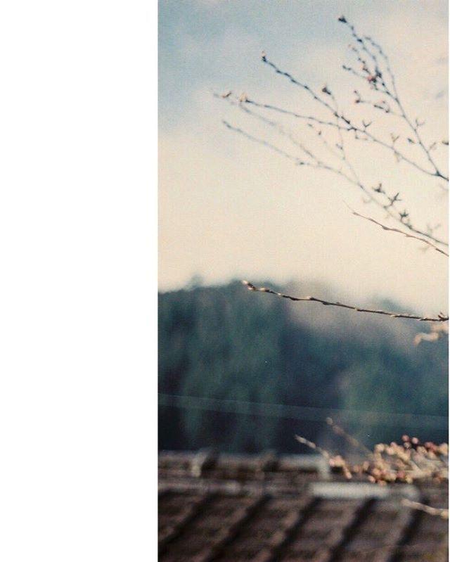 #期限切れフィルム #フィルムに恋してる #indies_gram #reco_ig #phos_japan #フィルム写真普及委員会 #生活とフィルム #pics_jp #film_jp #thefilmcommunity #フィルム部 #フィルム写真撮ってる人と繋がりたい #ふぃるむ寫眞 #フィルムの灯を絶やさない #フィルム写真部 #indy_photolife #as_archive #Closeup_archive #hueart_life #photooftheday #photovogue #キリトリセカイ #vague_memories #ファインダー越しの私の世界 #日々フィルム #filter365life #film_com #フィルムカメラに恋してる #オールドレンズ #単焦点