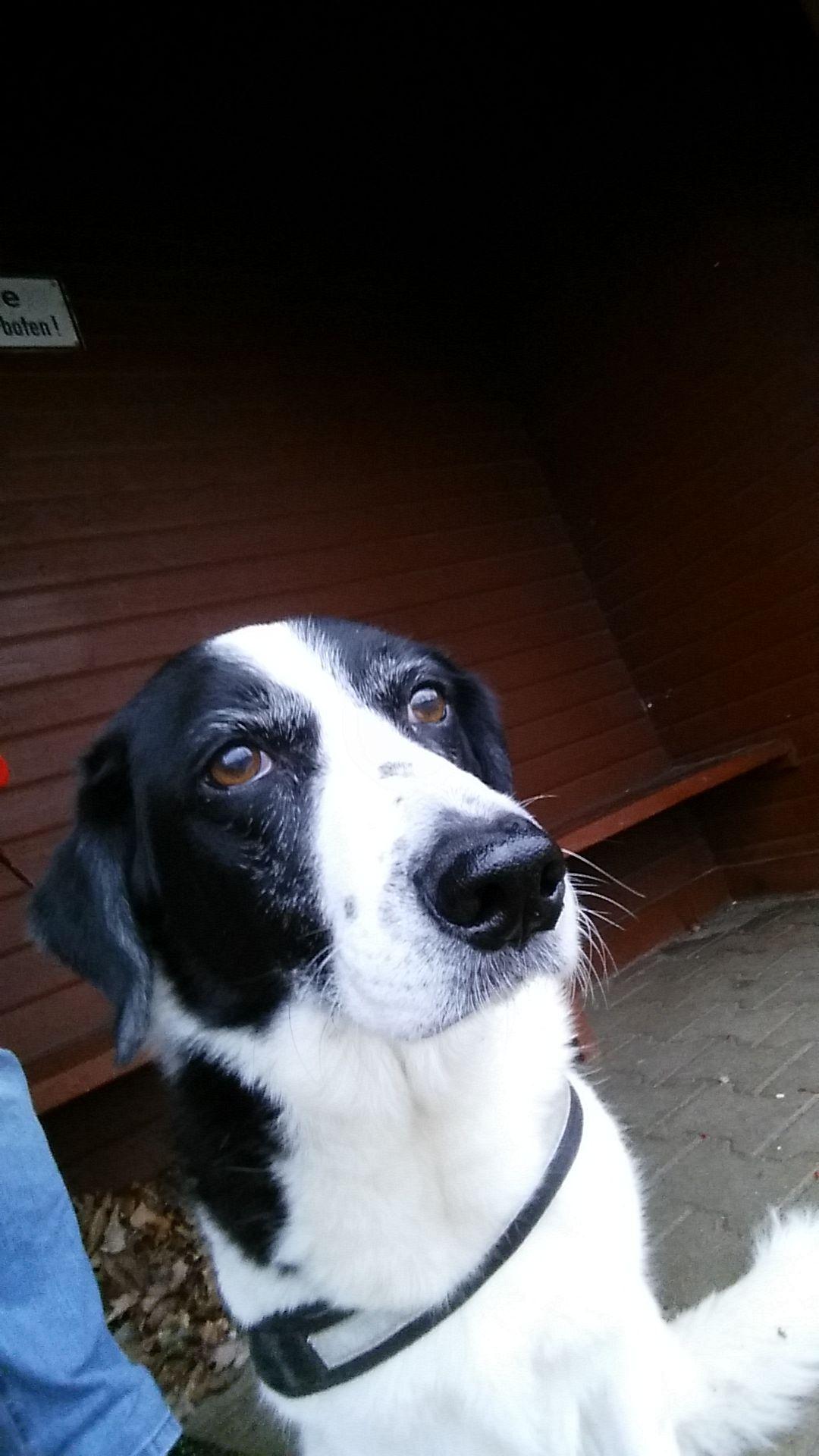 Hunde Foto: Ralf und Afra - Geht es jetzt los ....... Hier Dein Bild hochladen: http://ichliebehunde.com/hund-des-tages  #hund #hunde #hundebild #hundebilder #dog #dogs #dogfun  #dogpic #dogpictures