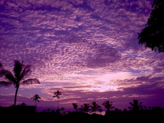 Purple Haze in Maui