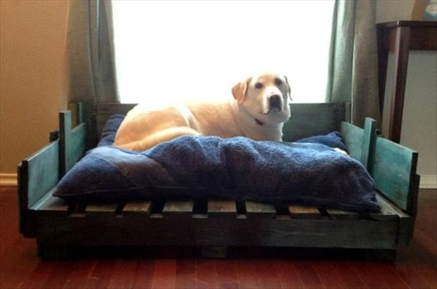 Camita de palés lacada • Wood/Pallet dog bed