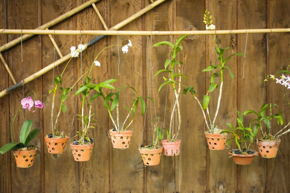 How To Grow Orchids At Home Handyman Magazine Moth