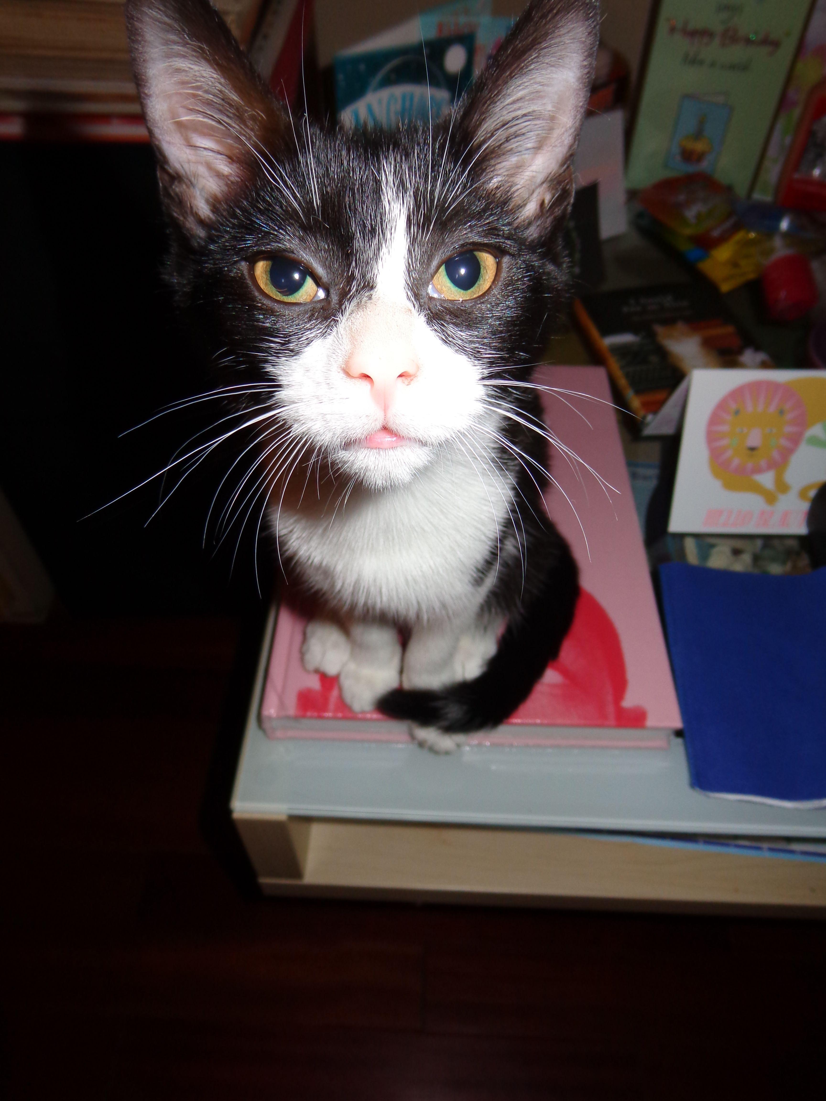 Poppy cat circa 2013.