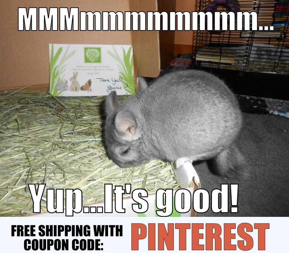 timothy hay for small pets at http smallpetselect com timothy hay