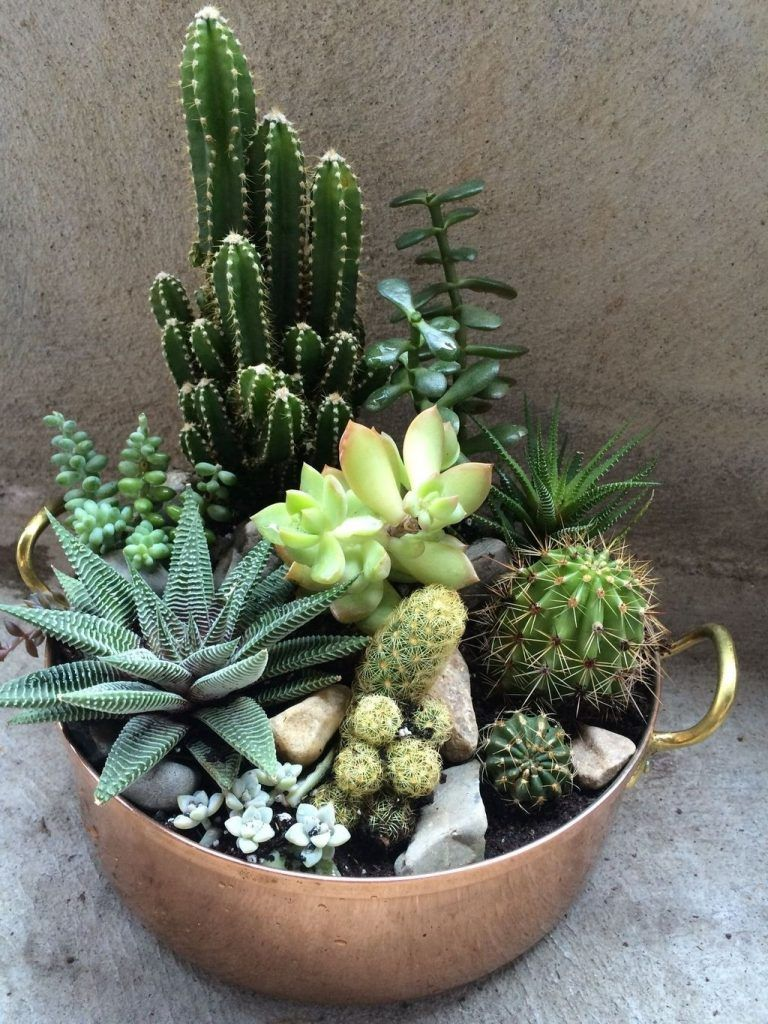 52 Best Diy Small Cactus Succulent Decoration Ideas Page 10 Of 52 Succulents Cactus House Plants Succulent Gardening