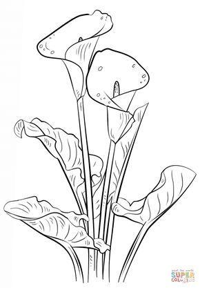 Pin On Dibujos De Flores