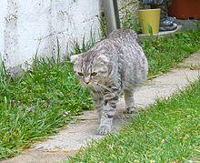 Pin by Apple Taiwan on 喵喵和旺旺知識等等 Cats, Abdominal, Pet care