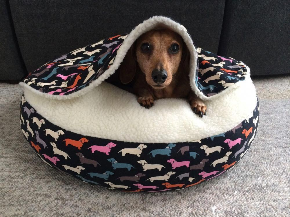 Dachshund Friendly And Curious Dog Beds For Small Dogs