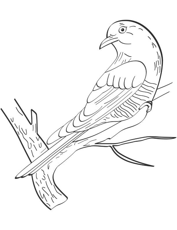 9 Amazing Cuckoo Coloring Pages For Kids Printable