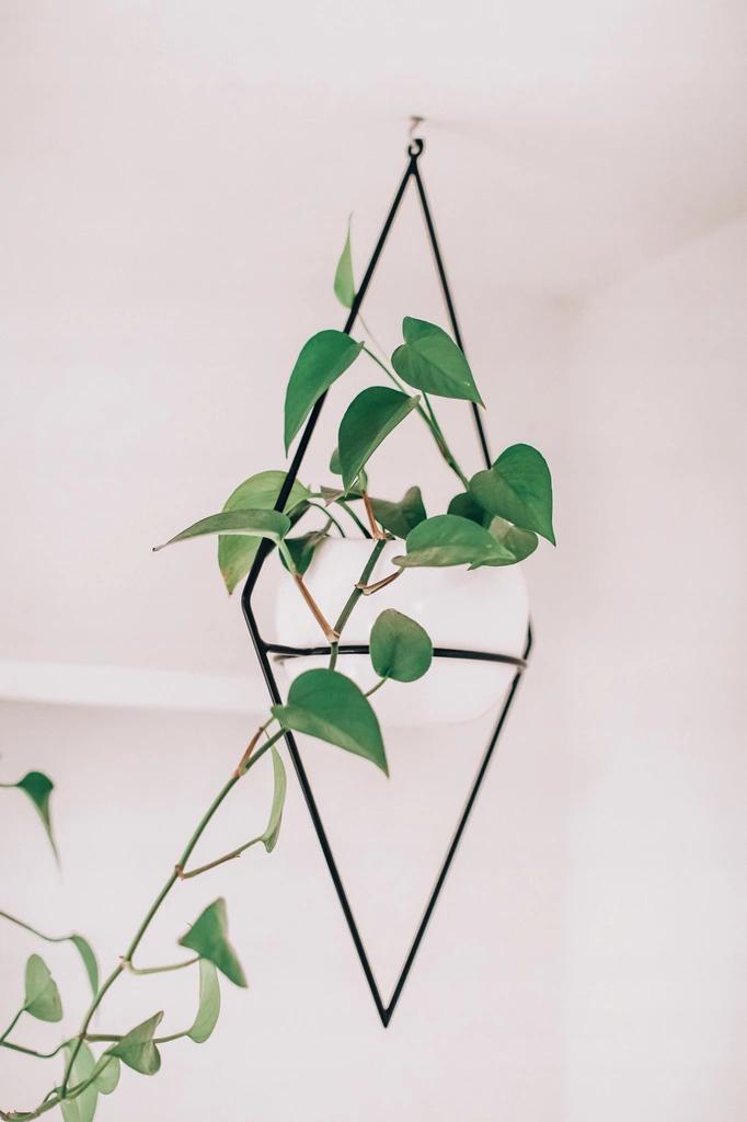 Kwietnik Wiszacy Ascetic Minko Design Pl 8275537286 Oficjalne Archiwum Allegro Plant Leaves Plants Cactus